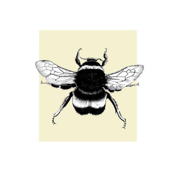 Bee by Helen Inkles