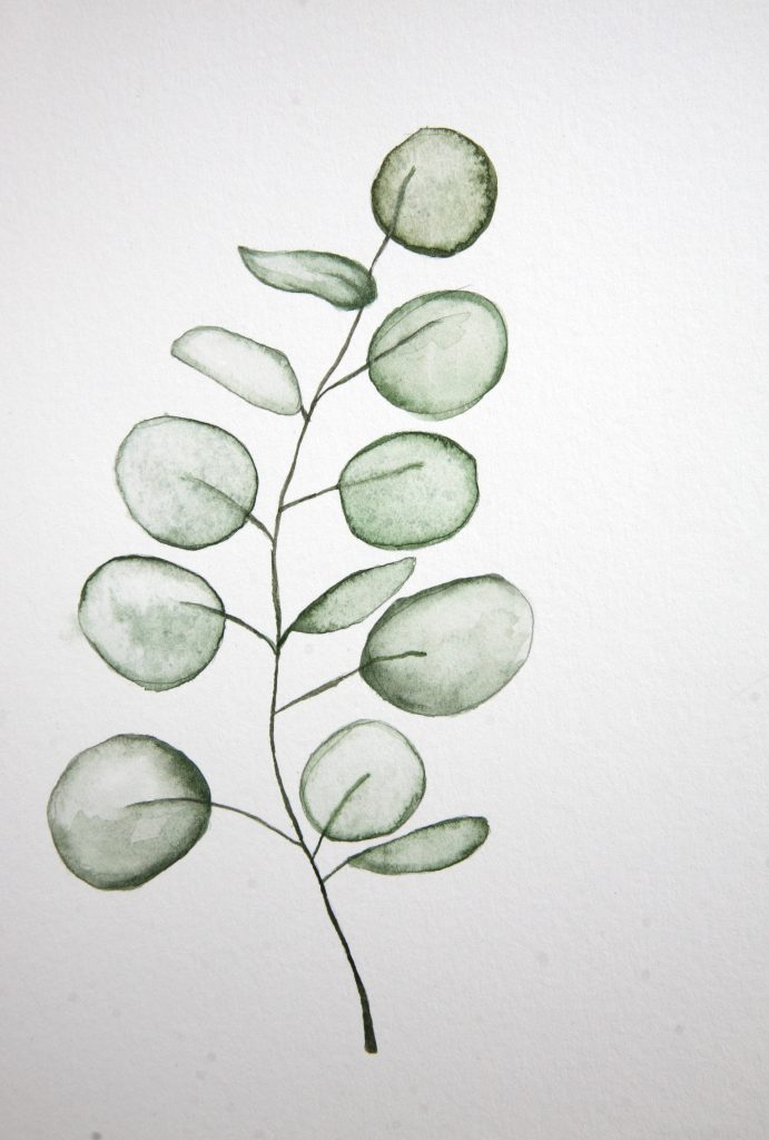 Eucalyptus Branch by Meredith O'Neal