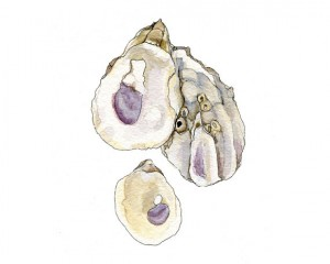 Oyster Shells by Torey Wahlstrom.