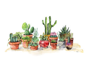 Potted Plants by Rachel Byler