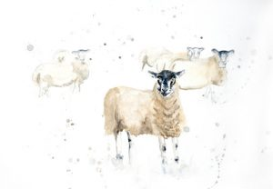 Sheep in Field by Lucy Dawson